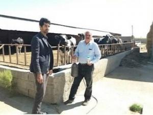 سم و ماده ضدعفونی رایگان بین دامداران شهرستان ساوجبلاغ توزیع شد