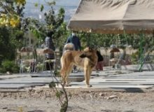 مرکز جمعآوری حیوانات مزاحم در بهشت سکینه راهاندازی شد